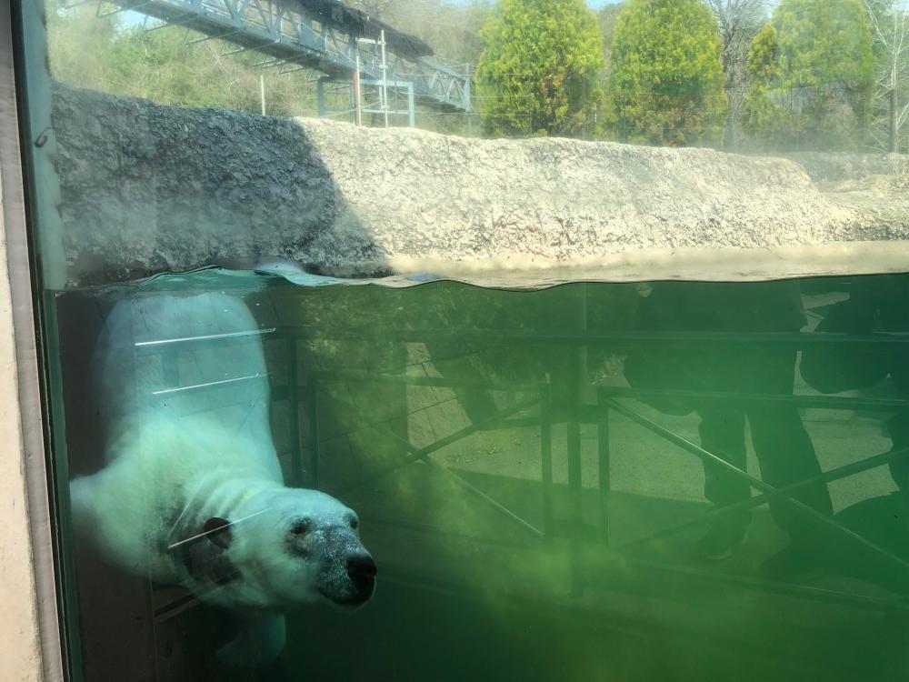 動物園 徳島