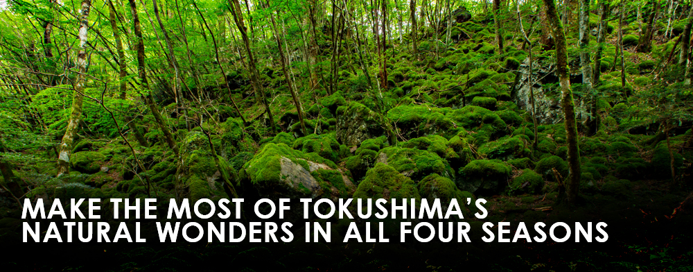 Make the Most of Tokushima's Natural Wonders in All Four Seasons